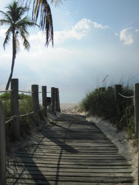 path to beach with palm trees