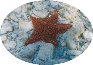 Starfish in Waterlemon Key