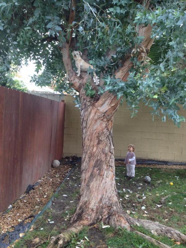 Tree Climbing Poppy