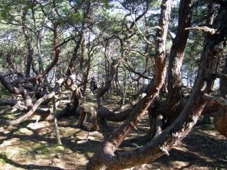http://rochellewisofffields.files.wordpress.com/2014/03/in_the_writhen_forest.jpg?w=768&h=576