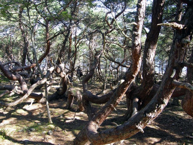 http://rochellewisofffields.files.wordpress.com/2014/03/in_the_writhen_forest.jpg