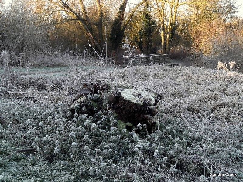 Frost on a  stump. Sandra Crook.