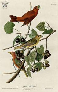 Audubon print