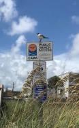 kure beach gull