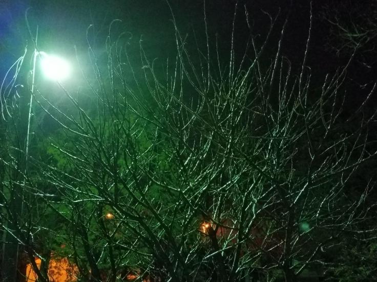 Trees Ronda DelBoccio