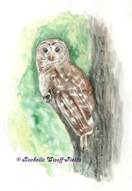 Owl on a Limb