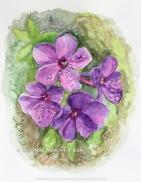 Original Painting - 11x 14 - 300.00