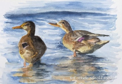 Ducks of a Feather ©