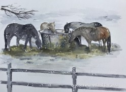 Horses in Winter ©