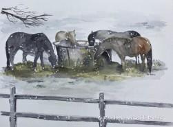 Horses in Winter ©
